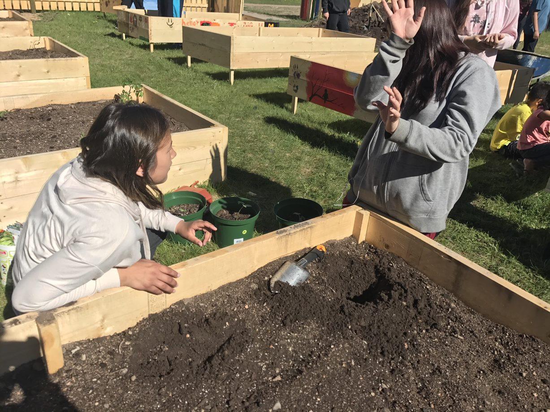Pinehouse's Raised Bed Gardens